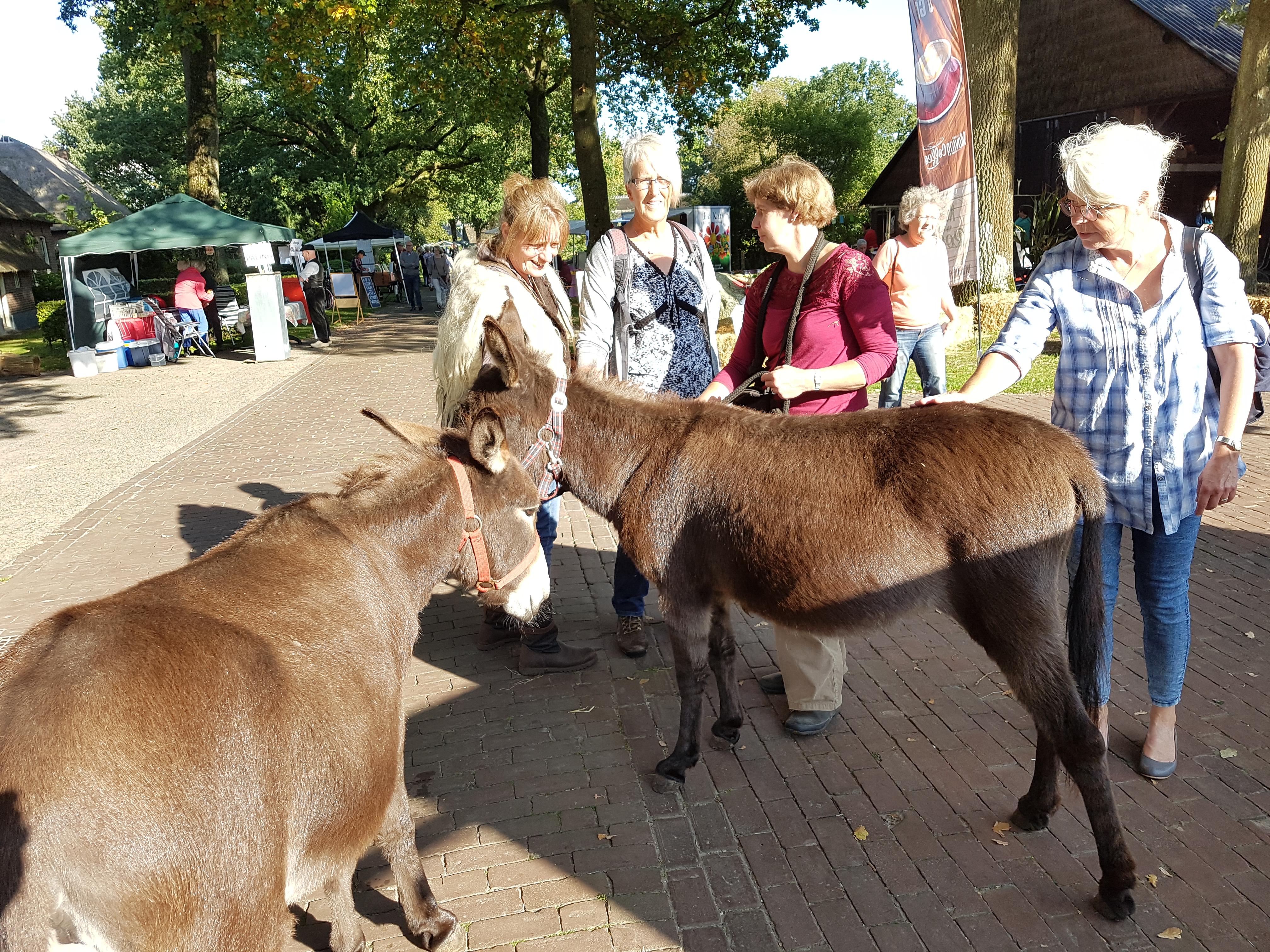 Wandeling door het dorp met de ezels